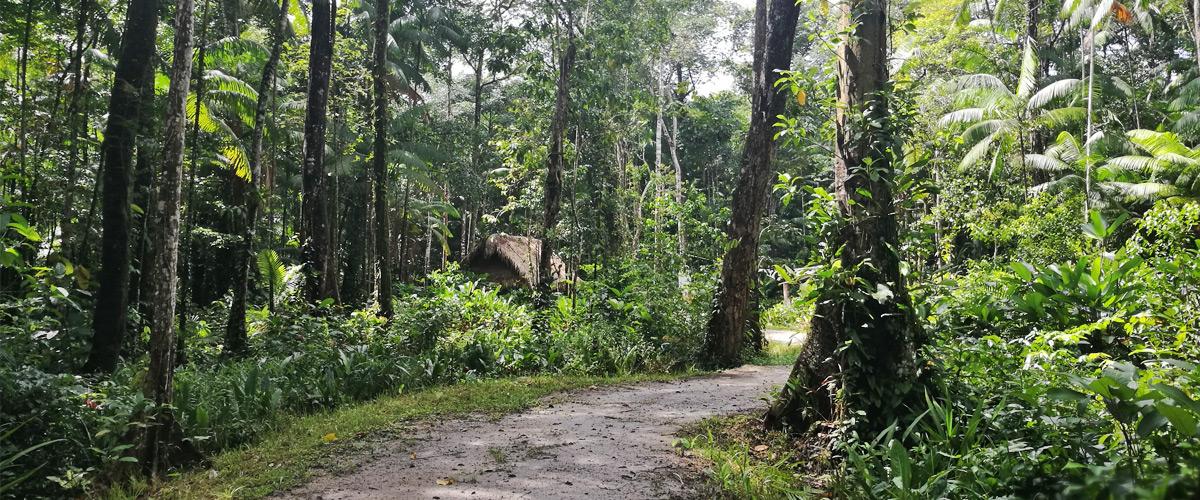 Yoga reis Suriname